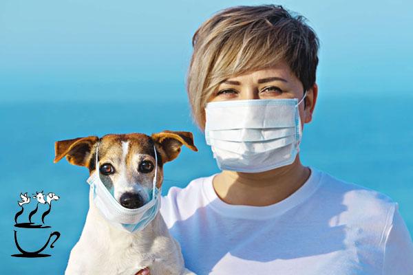 در دوره اپیدمی ویروس کرونا، تعامل حیوانات و انسان ها چگونه باید باشد؟