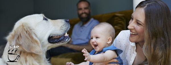 شرایط نگهداری سگ در خانه