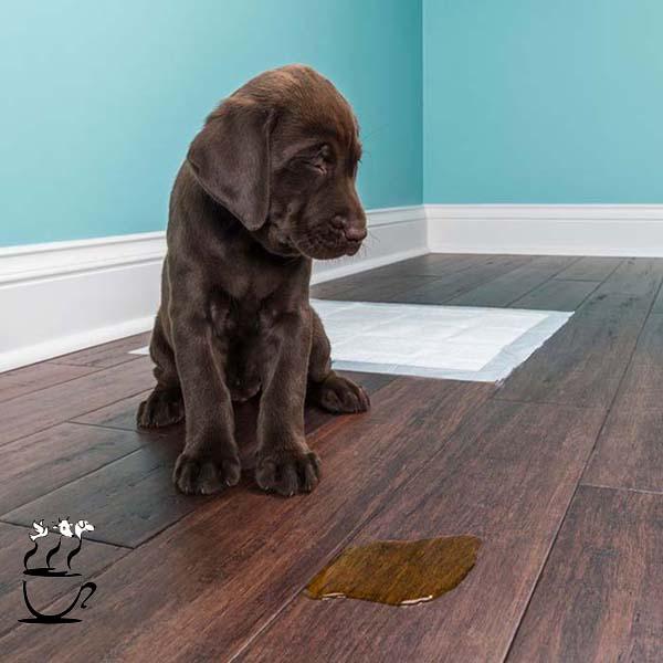 آموزش ادرار و مدفوع در سگ و گربه