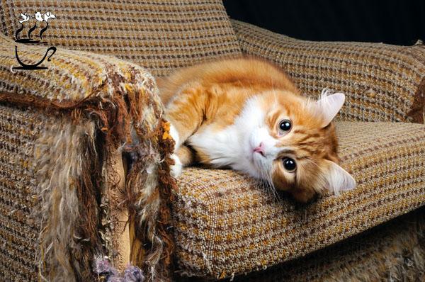 جلوگیری از خراشیدن و چنگ زدن گربه ها