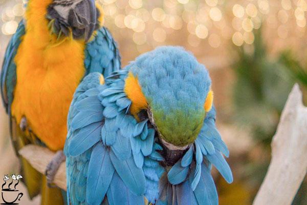 استفراغ پرندگان