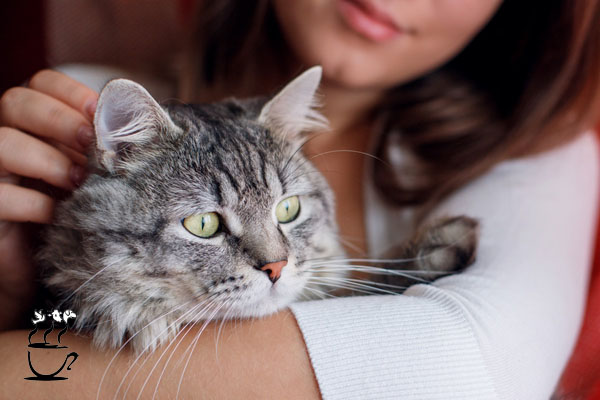 شرایط نگهداری گربه