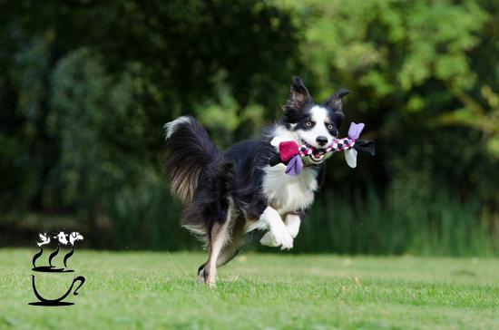 ورزش کردن سگ