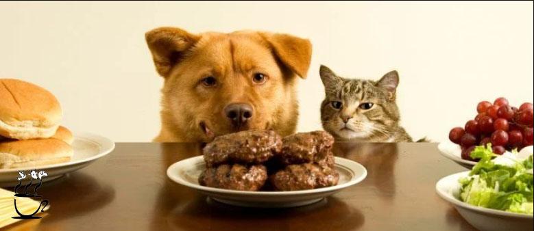 چه غذایی برای سگ بد است