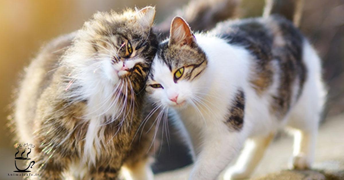 100 واقعیت درباره گربه ها